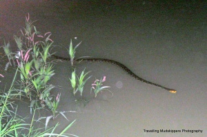 Our dinner at a swanky riverside restaurant included an unexpected guest.  We were told that seeing a snake in the water will give us a year of good luck, especially as we head into the Year of the Snake.