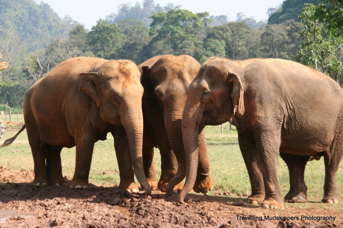 These elephants who often worked in isolation in the past, now have the opportunity to develop deep bonds with each other