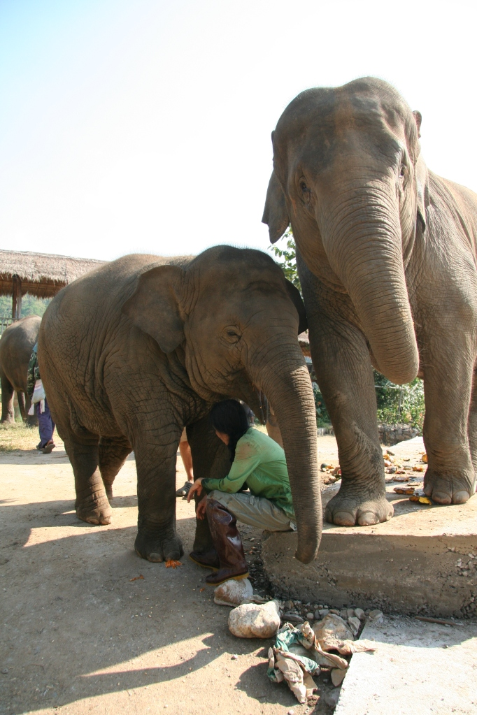 Lek and her Elephants - a bonding moment