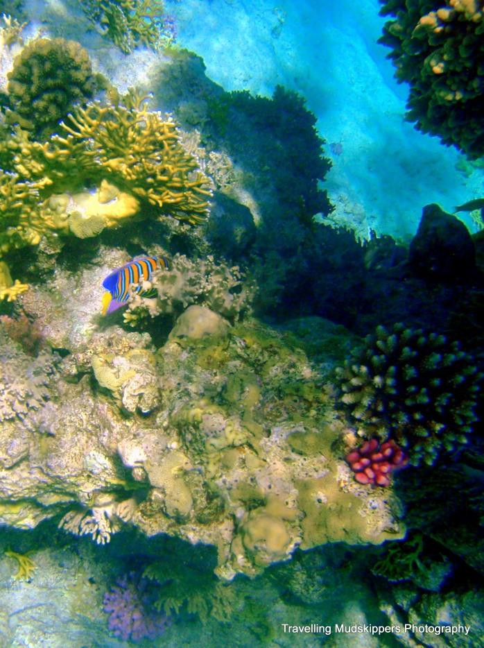 Red Sea Snorkel