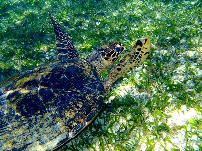 Close encounter with a sea turtle on Gili Meno snorkel trip!